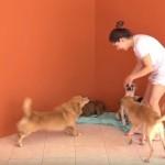 TV Assembleia aborda ações de combate à violência animal na Paraíba